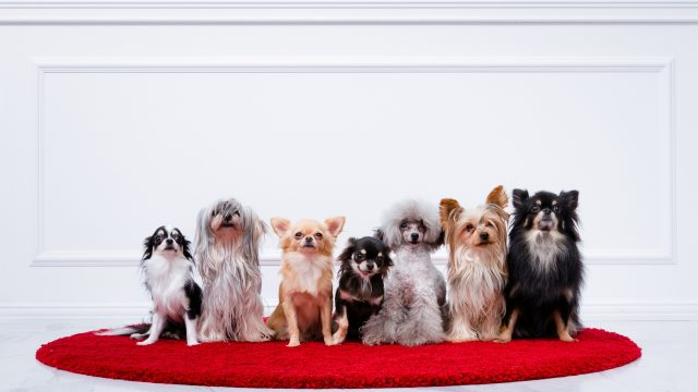 ワンちゃんは人間でいうと何歳?「犬の年齢」「種類と特徴」について