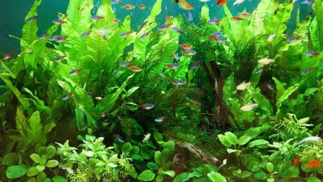 熱帯魚の種類とおすすめの水草について