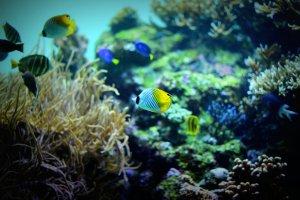熱帯魚の種類について(淡水と海水)