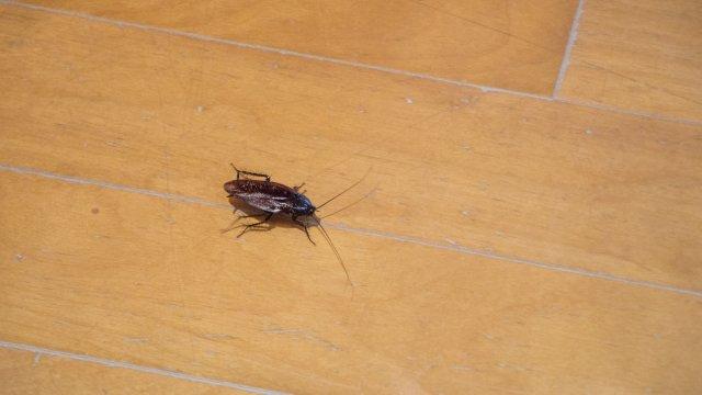 ゴキブリ対策!ホウ酸団子の作り方など駆除方法について