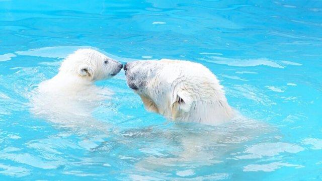 世界の動物園ランキング!敷地面積や珍しい動物などについて